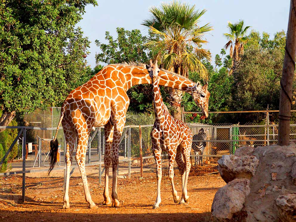 Zoo Pafos